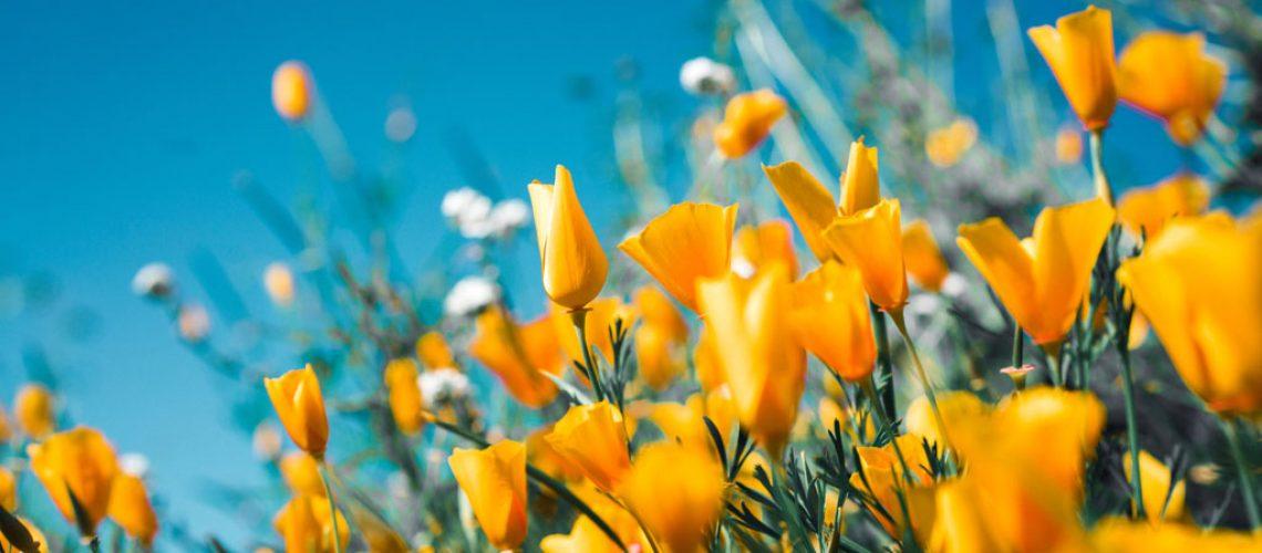 spring-campaign-thumbnail